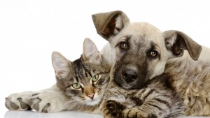 cats-dogs-animals-pets-buddies-cute-1366x768