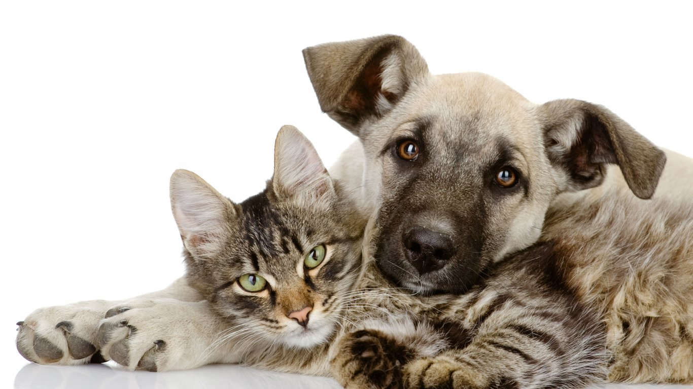 leigh dogs and cats home caring for pets throughout the