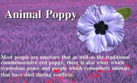 Wear a Purple Poppy with Pride | Leigh Dogs and Cats Home